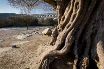 Ancient tree and even more ancient aqueduct