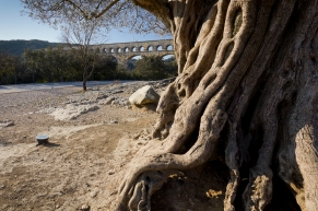 Ancient tree and even more ancient aqueduct