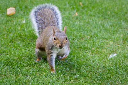 I was stalking squirrels, but the squirrel starting stalking me!