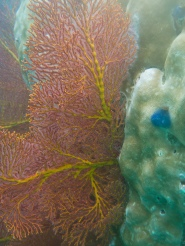 Using the flash brought out some amazing colour in the coral
