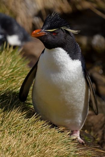 Rick Hopper Penguin